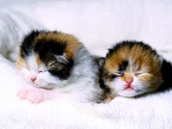 Two orange and white baby kittens